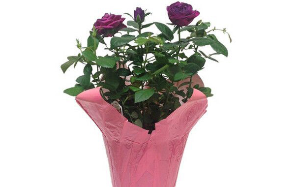 flower-pot-covers-600x380